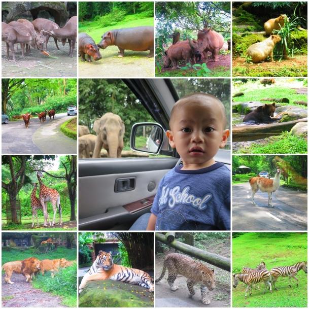 hewan-hewan-taman-safari